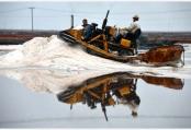 海鹽收獲 繽紛如畫