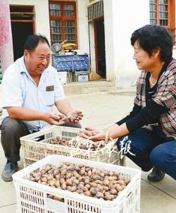 【乡村振兴】亭湖区新兴镇倪杰村 农旅工产业引领乡村振兴