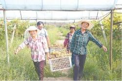 【新时代 新作为 新篇章】江苏盐城:产业扶贫,夯实脱贫之基