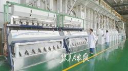 射阳大米入选中国农业品牌目录