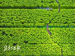 """又一重量级荣誉!时时彩开户成功创建""""国家森林城市"""""""