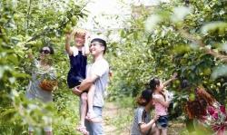 【新时代 新作为 新篇章】江苏大丰:绿色+智慧,打造农业新天地