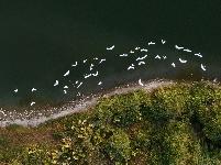 福建漳州:生態碧湖鳥翩飛