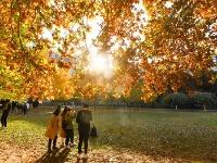 校园秋色如画