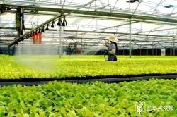 """这家地级市蔬菜拥有""""生态身份证"""",成为供沪蔬菜面积最大城市"""