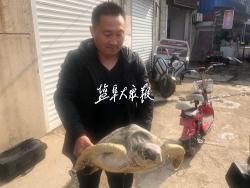 渔民捕得20多公斤重绿龟 爱心商家出资购买放生