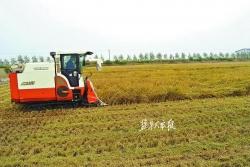 聚焦盐都畅销农产品品牌系列报道之六丨七星谷大米:好生态长出好滋味