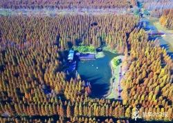 沿海造林,筑牢生态安全屏障 ——时时彩开户荣膺国家森林城市系列报道之一