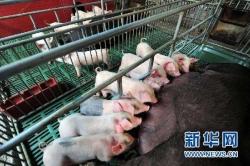 农业农村部:确保2021年生猪产能恢复正常水平