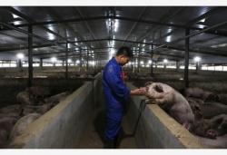 生猪稳产保供成今明两年农业工作重中之重