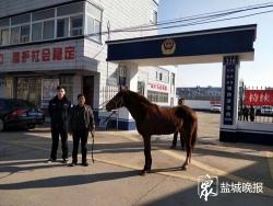 惊悚!有匹马在省道上狂奔 射阳民警凌晨擒马归还失主