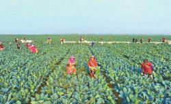 """【新时代 新作为 新篇章】江苏盐城:书写""""三农""""出彩答卷"""