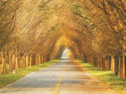 【新时代 新作为 新篇章】江苏盐城:城市森林化 村庄花园化 林业产业化