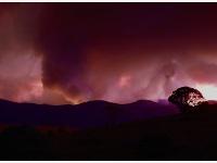堪培拉遭遇林火威脅