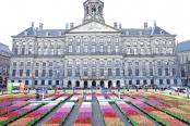 荷兰迎来郁金香日