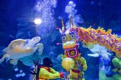 水中舞龍慶新春