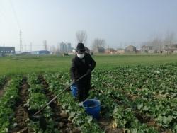 滨海县天场镇确保疫情防控和春耕生产两不误