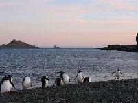 与自然和谐相处:南极长城站的企鹅与贼鸥