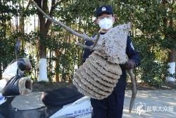"""民警清除路边马蜂窝,85岁老人:""""没见过这么大的!"""""""