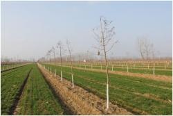 大丰区沿海林场完成新增造林1600亩