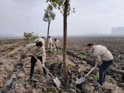 国网阜宁供电公司:清除疫情阴霾,播种绿色希望