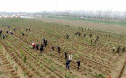 第42个植树节 共为美丽中国添新绿