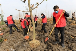 """阜寧縣自然資源和規劃局:以植樹節為契機大力推進""""1234""""工程"""