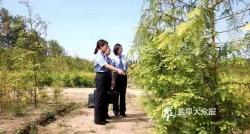 东台探索公益诉讼修复生态见实效 补植复绿树木5000余棵,面积达60亩