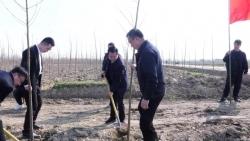 射阳县旅投公司:党员干部齐上阵  植树造林添绿意