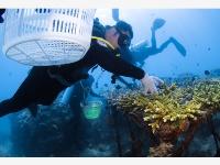 海洋三亞:海底生態修復忙