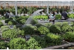 高效現代農業助推鄉村振興