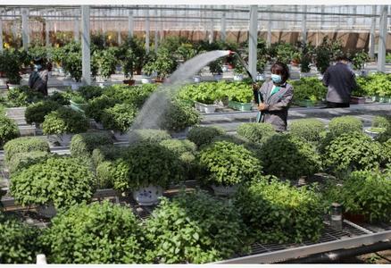 高效现代农业助推乡村振兴