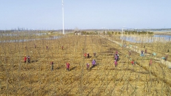生态盐城添新绿 全市新增成片林8.82万亩