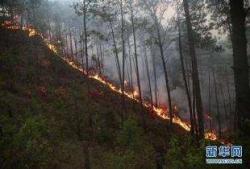 近期森林火灾多发频发,四川省、凉山州人民政府被约谈