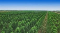 江苏射阳:点线面结合打造精品林 着力推进绿美村庄建设