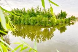 唐洋鎮:以魚養河扮靚生態