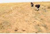 春季灭鼠 保护草原
