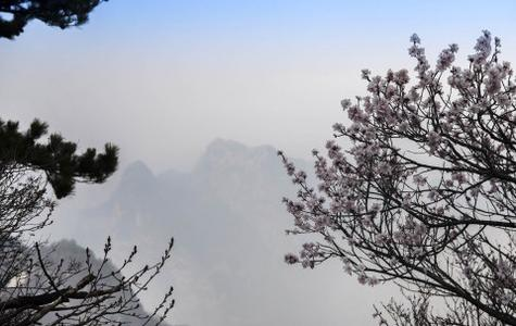 西岳华山春色美