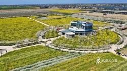 油菜花還田做綠肥,河水8道過濾流入農田……鹽城這片地里名堂多