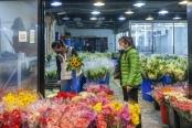 上海:花卉市场开市忙