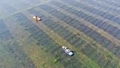 生态种养助农增收
