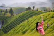 """湖北鹤峰:网络直播""""带茶出山"""""""