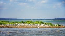最是一年初夏時 遺鷗啼鳴湖更幽