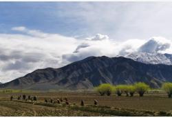 西藏日喀則:農民春耕忙
