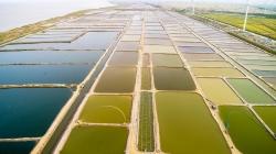 射陽河蟹生態育苗產量占全國70%