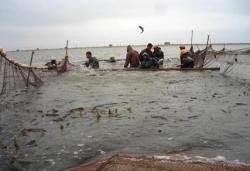 江苏射阳:以现代渔业高质量发展 推动乡村振兴