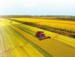 地方与农场联动,best365农业更有奔头