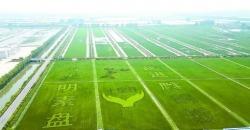 """打好""""绿色牌""""唱响""""生态歌""""!盐都区加快农业产业绿色发展纪实"""