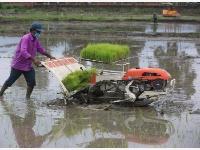 """尼泊尔农民""""水稻节""""里忙插秧"""