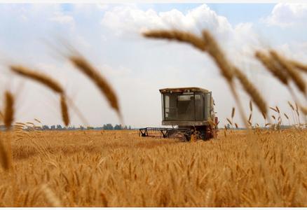 安徽:小麦收割忙
